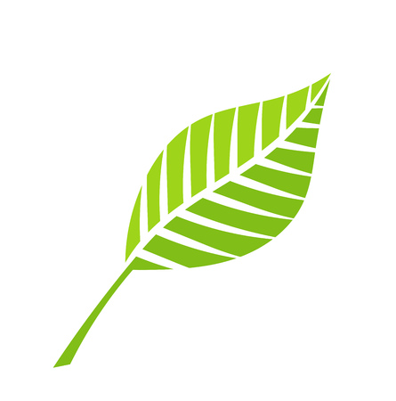 harmony nature: Green leaf vector