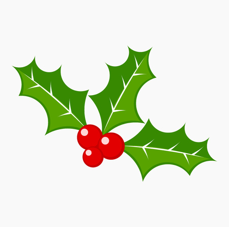 aquifolium: Holly berries vector illustration