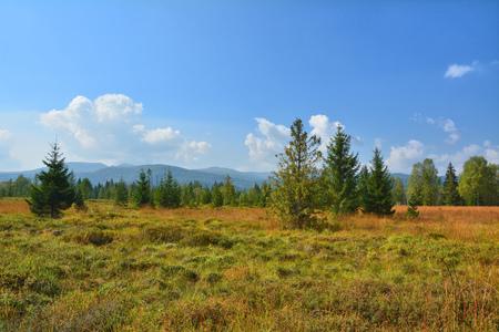 peat: Peat bog landscape in Poland National Park Bieszczady