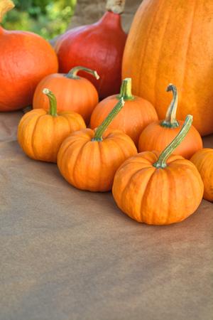 Autumnal orange pumpkins on paper background
