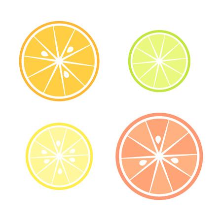Citrus slices - orange, grapefruit, lemon and lime illustration