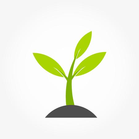 Little plant spring germination. Vector illustration