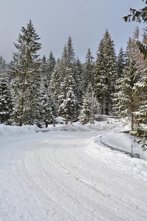 morskie: Path in PolishTatra mountain forest in winter