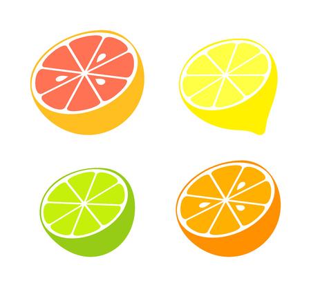 Citrus fruit collection. Vector illustration