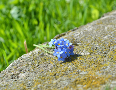 Forget me not flowers buquet on stone