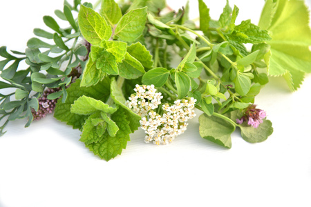 ruta: Fresh green herbs bunch isolated on white background