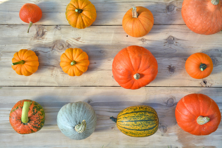 Pumpkins and squashes on wooden board. Autumn background