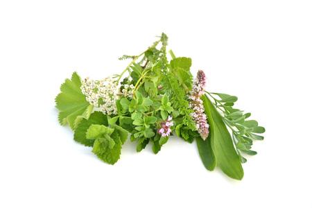 Fresh green herbs bouquet on white background Stock Photo