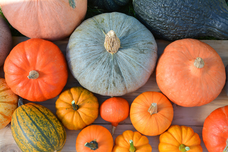 Various colorful pumpkins on wooden background, top view