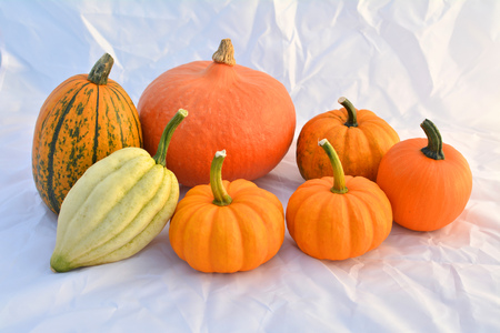 Group of autumn pumpkins and squashes