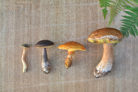 Various edible forest mushrooms on wooden background