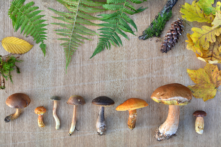 Nature frame of edible forest mushrooms, leaves and cones. Natural background Stock Photo