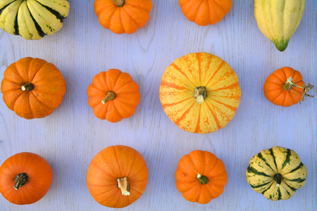 Pumpkins and squashes varieties - creative flat lay composition