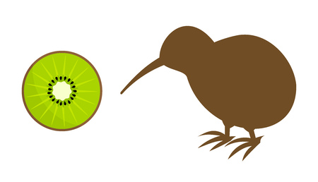 Kiwi fruit and kiwi bird icons. Vector illustration