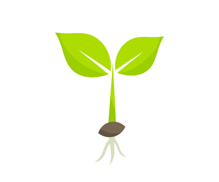 Little germinating plant from seed seedling icon. Vector illustration.