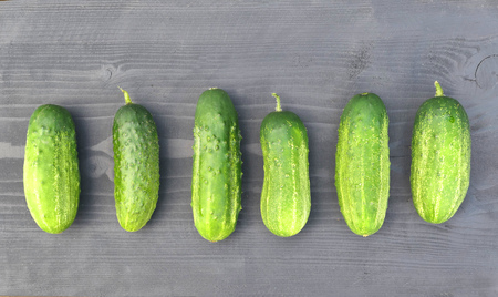 Fresh harvested green cucumbers on wooden background.