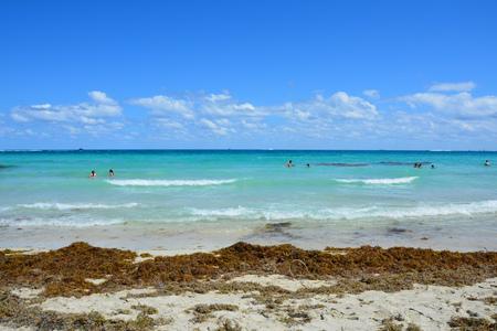 Atlantic Ocean sandy beach with lots of seaweed at Miami Beach shore.