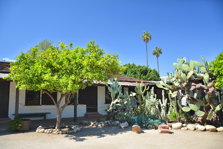 Cactus and lemon tree in Avila Adobe garden in Los Angeles Pueblo by Olvera street.