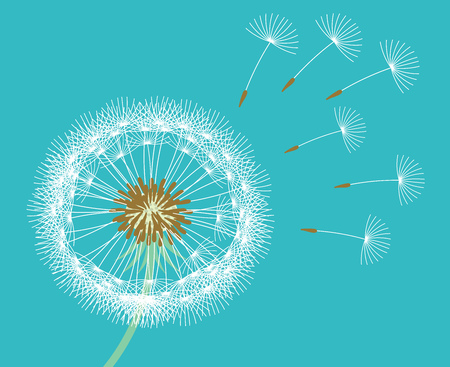 White dandelion seeds blown by wind blue background. Vector illustration.