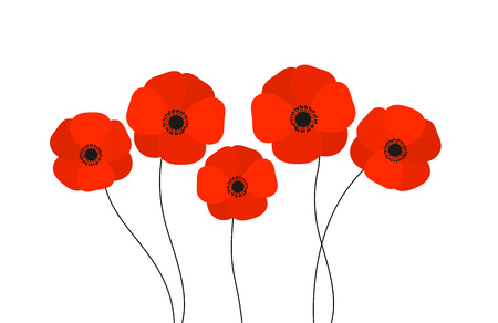 Red poppies flowers isolated on white background. Vector illustration.