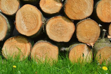 Wood logs and grass natural background. Garden. Imagens