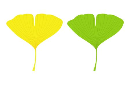 Ginkgo biloba leaf icons, green and autumn yellow. Vector illustration.