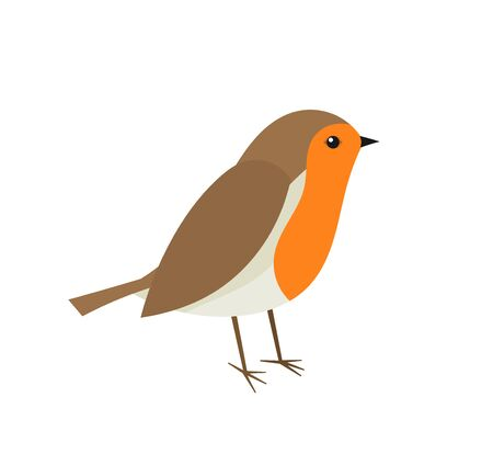Cute robin bird. Vector illustration.