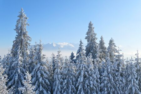 Winter trees covered with snow and Tatra mountains landscape.