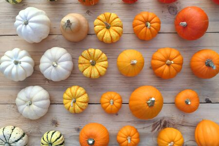 Colorful pumpkins and squashes collection. Autumn background.