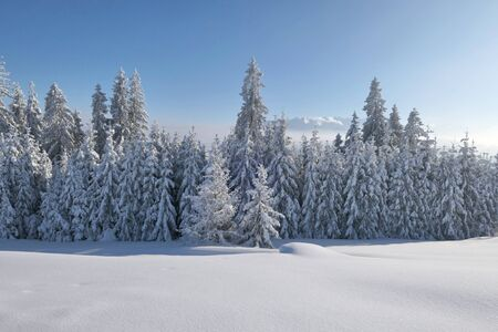 Winter forest covered with snow in mountains, winter wonderland. Copy space. Banco de Imagens
