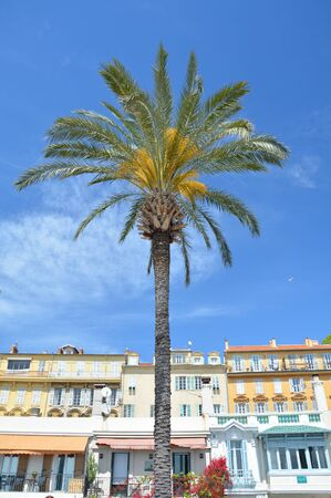 Palm tree and seaside architecture in Nice, France, French Riviera.