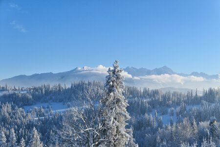 Tatra mountains and forest in snow winter landscape.