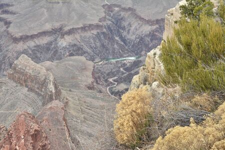 Plants growing on the edge of Grand Canyon in Arizona, USA. Colorado river in the background.
