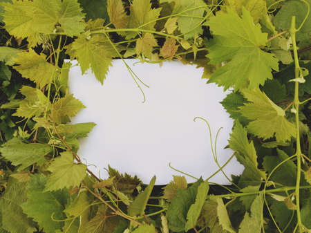 A vine wrapped around white message paper.