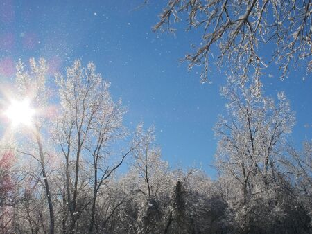 ice storm: The sun shines and the trees sparkle following an ice storm. Stock Photo
