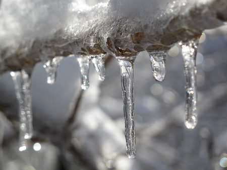 ice storm: Icicles hang from a tree branch after an ice storm.
