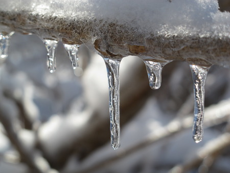icicles: Icicles hang from a tree branch after an ice storm.