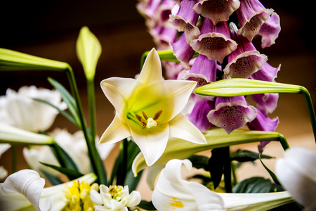 White flowers begin to bloom beside purple pitcher-like flower and near flower buds.