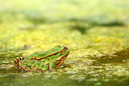 Frog in full. skin and pattern of bright colors. Background bokeh effect. 版權商用圖片