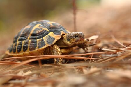 Turtle in its natural environment in close-up and bokeh