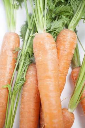 Group of freshly picked carrots with stems photo