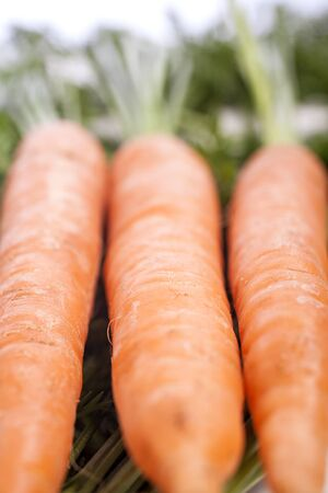 Group of freshly picked carrots with stems Stock Photo - 15572084