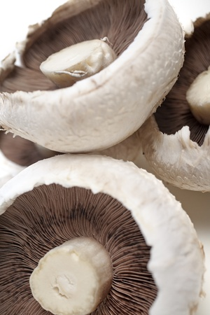 Freshly picked mushrooms Stock Photo - 15572111