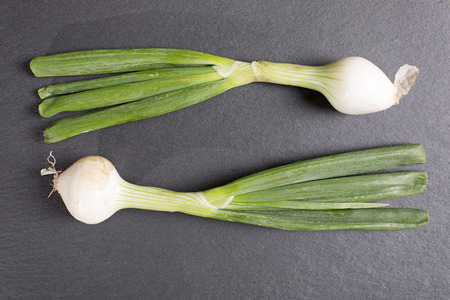 Large fresh raw spring onion on black slate with copy space