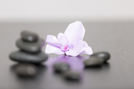 head stones: Pile of three spa stones with a purple Orchid flower head Stock Photo