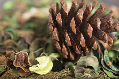 sooth: Pot Pourri background with detail on the dried leaves and large pine cone
