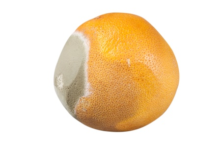moldy orange on a white background Stock Photo