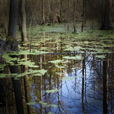 pantanos: pantano