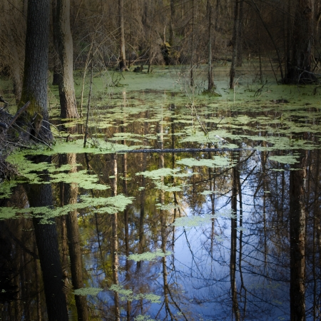 marshes: swamp Stock Photo
