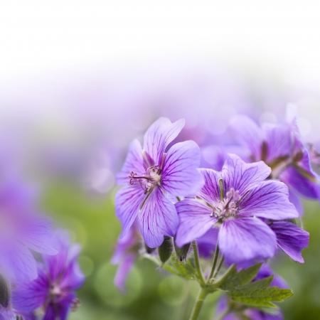 floral background Stok Fotoğraf - 13846451